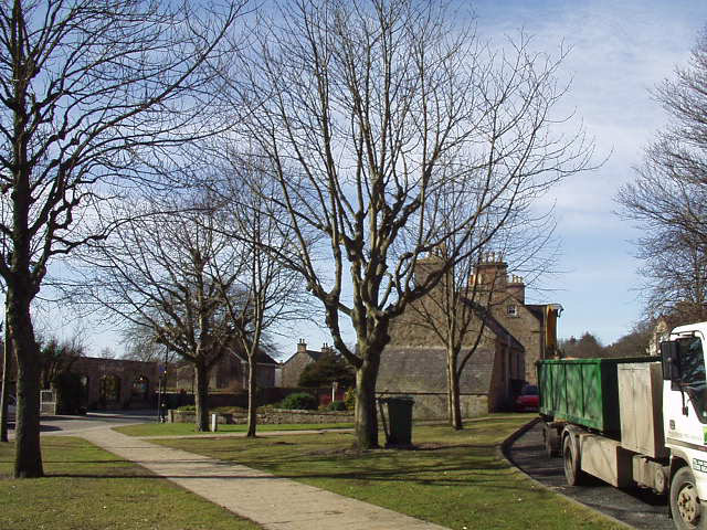 dornoch-square-trees-after-crown-thinning